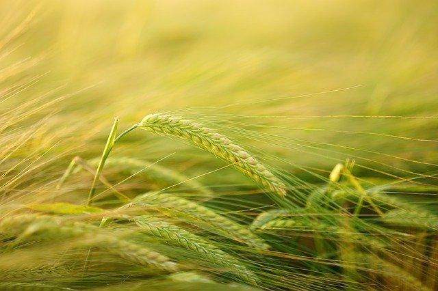 Co to są techniki rolnictwa ekologicznego i na co zwracają uwagę?